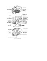 the brain pictures and tables