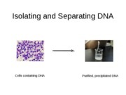 Topic 6_Isolating_and_Separating_DNA Dr. Updike