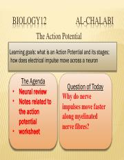 Action Potential-converted 4.pdf