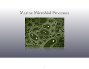 10_Microbial_Processes(2)