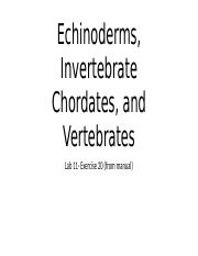 Lab 11-Echinoderms, Invertebrate Chordates, and Vertebrates