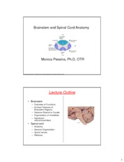 sp+cord+brainstem+12