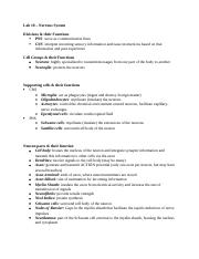 Practical 4 Review Sheet Answers.docx