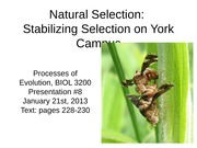 10 - Presentation #8 - Natural Selection - Stabilizing Selection operating in Yorks green spaces