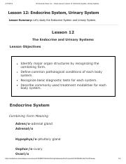 Lesson 12 - Endocrine System, Urinary System