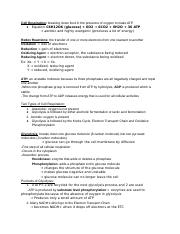 Cell Respiration Study Guide.docx