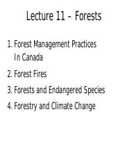 GEOG 2EI3 Lecture 11: Forests