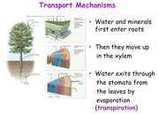 Notes on Plant Transport