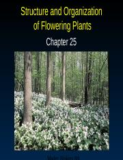 AP Ch. 25--Structure & Organization of Plants