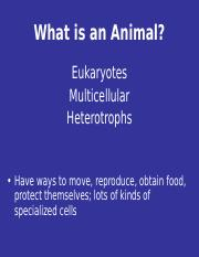 What is an Animal.ppt