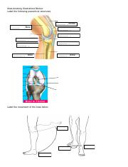 Knee Anatomy Illustrations Review.pdf