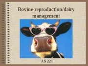 Bovine_reproduction