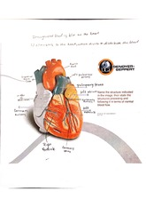 Heart Structures class notes