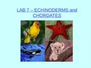LAB 7 - Animal Diversity II - Echinoderms and Chordates