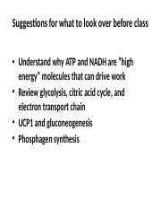 Physiology Lecture 4.pptx