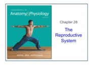ABCT2326 Reproductive System Student (1)