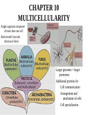 Ch 10e Multicellularity.ppt