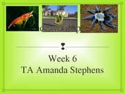 Week 6 - Arthropods