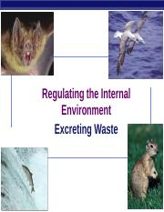 3 - Excreting Waste.ppt