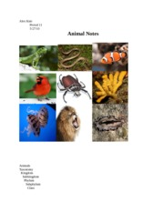 Animal Notes Compiled