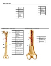 Chapter 7 - Labeling Bone Structure