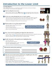 introduction-to-the-lower-limb