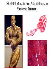 5-Muscles and Adaptations to Exercise(1).pdf