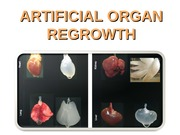ARTIFICIAL_ORGAN_REGROWTH3