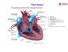 AMSE 216-Lecture Note-7-Cardiovascular Applications [ȣȯ 모드]