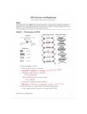 EAnderson DNA Structure and Replication.docx