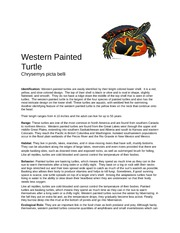 Western Painted Turtle Report