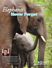Elephants Never Forget.pdf