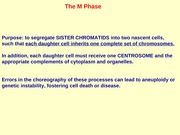lecture 7 phases of cell cycle