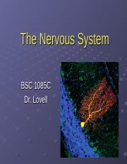 ch. 12 & 13 nervous system