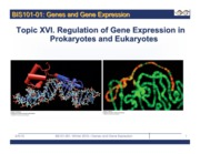 Lecture 18 Topic XVI. Regulation of Gene Expression