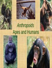 19_Apes_and_Humans.ppt