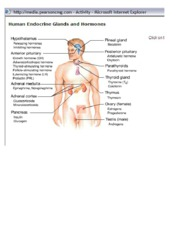 Human Endocrine Glands and Hormones