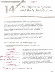 KEY_Digestive System Review_2009-10