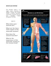 20160930110919MUSCULAR SYSTEM.pdf