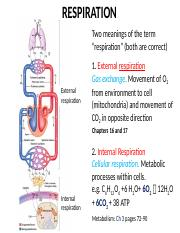 BIO2A03-Respiration Lecture Notes