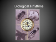 Biological Rhythms for B and B