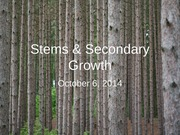 Oct 6 - Stems & Secondary Growth (2)
