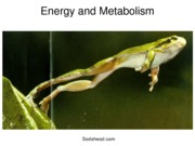 Biology, Energy and Metabolism Notes