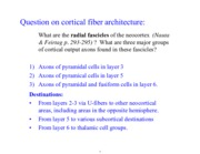 cortical fiber architecture notes