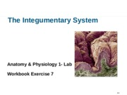 excercise 7 the integumentary system View notes - exercise 7 - the integumentary system from biol 2401 at richland  community college richland college biol 2401 marieb a&p lab manual.