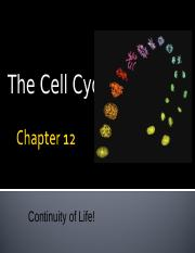 Chapter 12 Cell Cycle