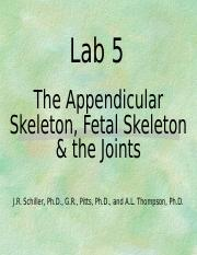 Lab 5 - Appendicular skeleton-1.ppt