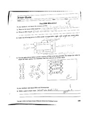 The DNA Molecule Study Guide Worksheet