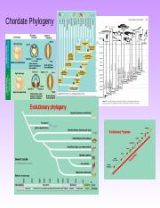 CHORDATE_PHYLOGENY_Fall2014 (1).ppt