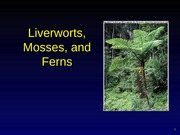 lab 4a mosses liverworts ferns